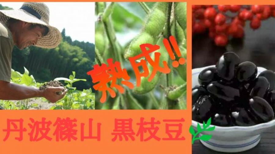 【年に一度の特別企画】幻の熟成黒枝豆付き 交流会
