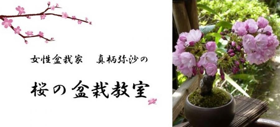 桜の盆栽教室~生きるアートBONSAI~