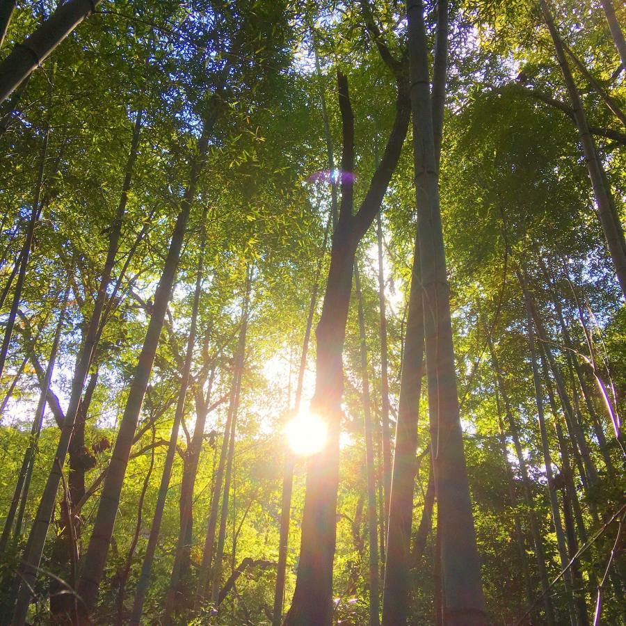 もりなっぷ!森林浴&お昼寝サロン(森のお茶付き)(12月)