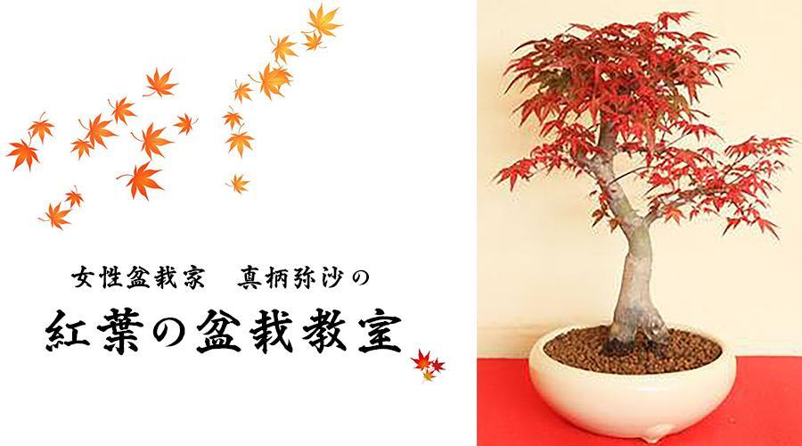 紅葉の盆栽教室~生きるアートBONSAI~