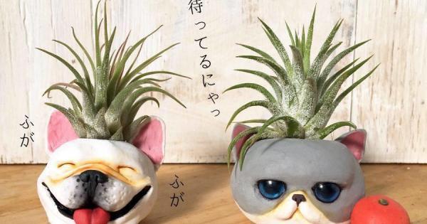 乾真希先生の粘土造形塾(5月) エアープランツホルダーを作ろう!